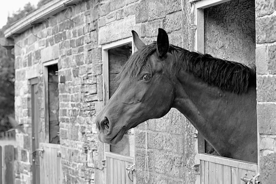 Equestrian yard photography