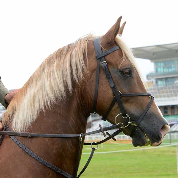 Horse Portrait Photographer North West